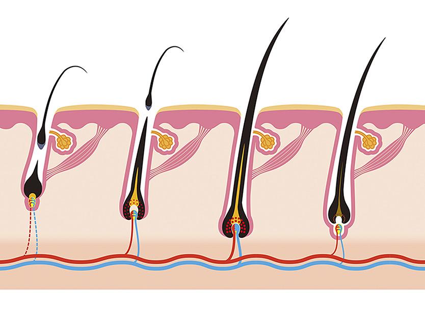 Conoscere il ciclo di vita del capello per averne cura, anche con trattamenti anticaduta