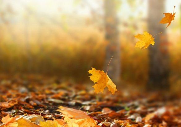 Caduta capelli, quando preoccuparsi: il cambio di stagione