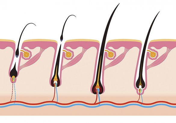A closer look at hair loss treatments: the life cycle of hair